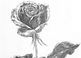 花的素描画法范例(二)