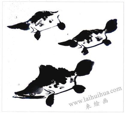 鳜鱼的写意画法步骤03,04