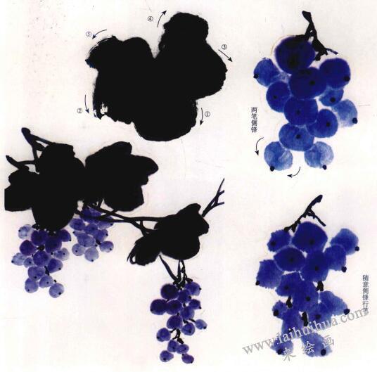 葡萄的写意画法