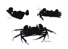 螃蟹写意画法(二)