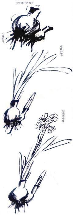 水仙写意画法