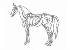 卡通画哺乳动物的结构及其特征