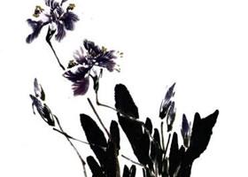 蝴蝶兰的画法步骤解析