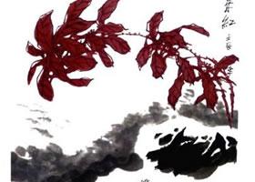 雁来红的画法(二)