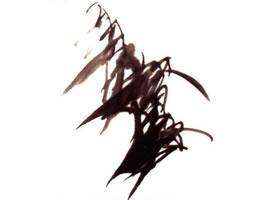 竹子的画法步骤解析