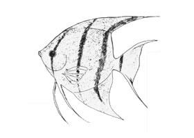 热带鱼卡通画画法步骤