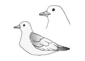 海鸥卡通画画法