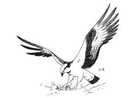 猛禽的卡通画画法