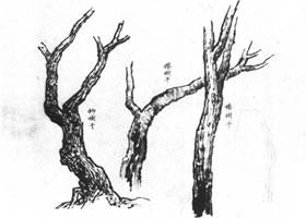 中国画的画树技法