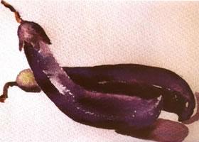 茄子水彩画的写生步骤和写生要点