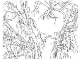 柳树的速写方法解析