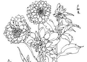 花卉速写的观察方法