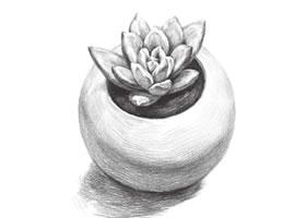 多肉植物素描画法(二)