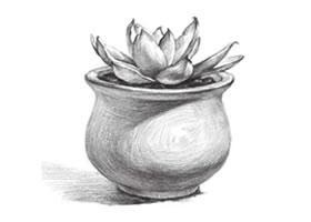 多肉植物素描画法(三)