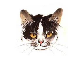 水墨画猫头部画法过程之三