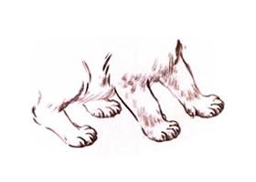 猫腿、猫足、猫爪水墨画法
