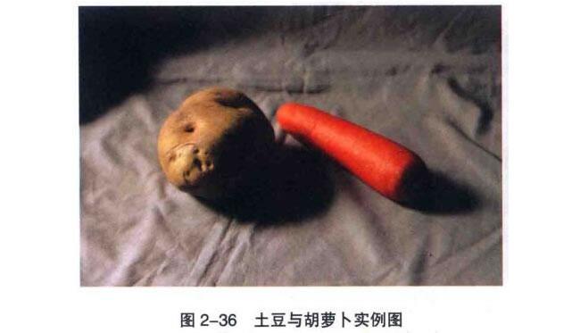 土豆与胡萝卜素描画法