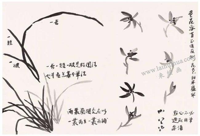 兰草的写意画法