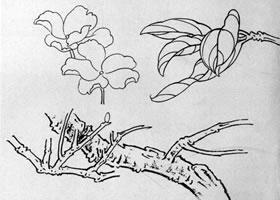 白描花卉基本技法