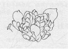 花朵白描的画法