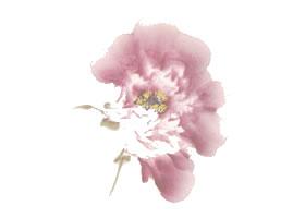 粉红牡丹花侧面写意画法