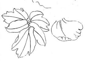 工笔牡丹线描教程