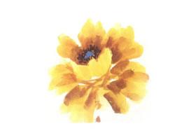 黄色牡丹花画法