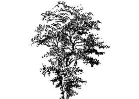 速写画树步骤