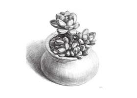 凝脂莲素描画法步骤