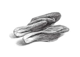 青菜素描画法(二)