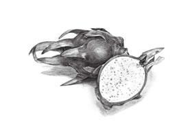 火龙果素描画法(二)