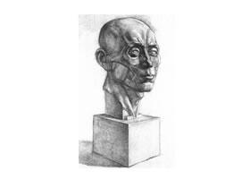 石膏肌肉头像素描画法
