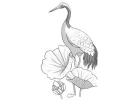 荷中鹤卡通素描画法