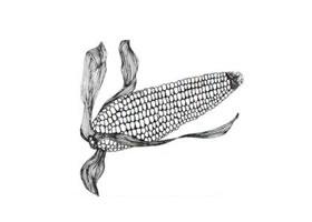 玉米线描画法