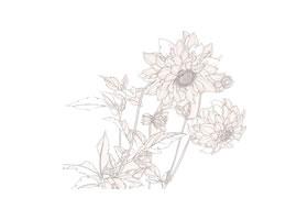 工笔花卉白描图例