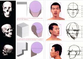 人物头部解剖及头部速写表现范例
