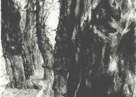 门采尔《路旁的老杨树》素描作品高清大图欣赏