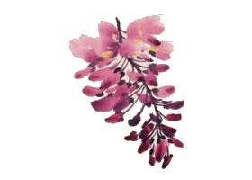 紫藤花的写意画法