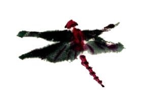 蜻蜓的写意画法(二)