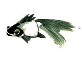 金鱼的写意画法(二)