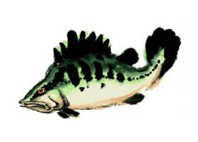 鳜鱼的写意画法步骤图示