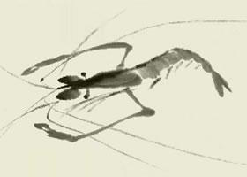 虾的写意画法步骤图示