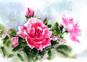 月季花水彩画法步骤图示
