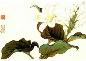 玉簪花的工笔画法步骤(一)