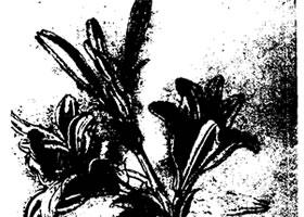 达芬奇《百合花》素描作品赏析