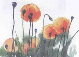 罂粟花的水彩画法步骤图示