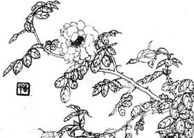 玫瑰白描作品