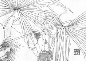 棕榈白描作品