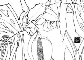 龟背竹白描花卉作品