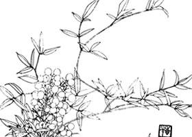 南天竹白描花卉作品